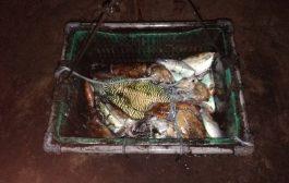 صيادو ابين يهددون بالتصعيد إذا لم يتم التراجع عن قرار منع صيد الحبار