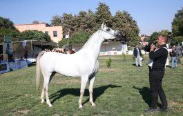 دعم إماراتي لبطولة لبنان السابعة لجمال الخيول