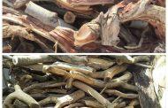 انتعاش تجارة الحطب في صنعاء مع تفاقم أزمة الوقود والغاز منزلي