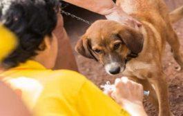 صنعاء.. تسجيل 25 حالة يومياً إصابة بداء الكلب