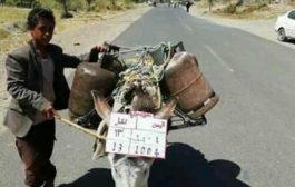 """بالصورة الحمير في اليمن تحمل رقما جمركيا """"هل ستعجب الفكرة الحوثيين لتطبيقها""""؟"""