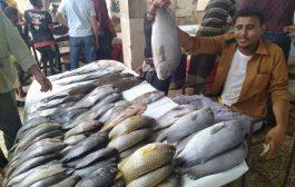 عدن : ارتفاع أسعار الأسماك يُحرم غالبية المواطنين منها